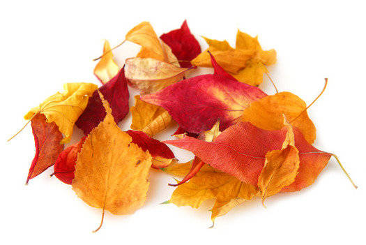 Crisp Golden Leaves Fragrance Oil