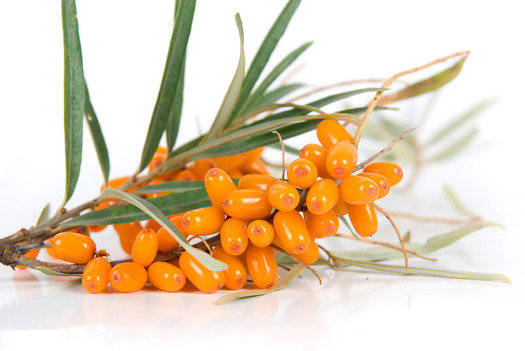 Sea Buckthorn Fragrance Oil