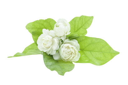 Antique Blossom Fragrance Oil
