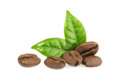 Coffee Essence Fragrance Oil