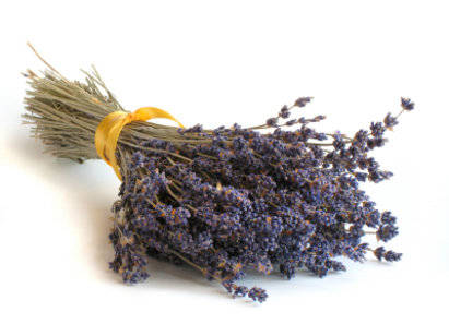 Lavender & Amber Fragrance Oil