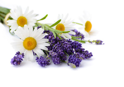 Lavender & Chamomile Fragrance Oil