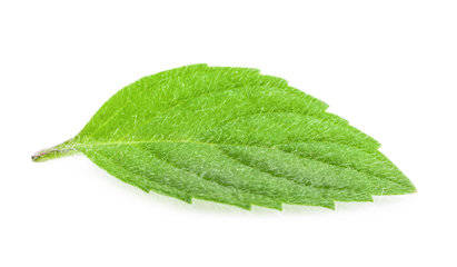 Mint Fresh Fragrance Oil