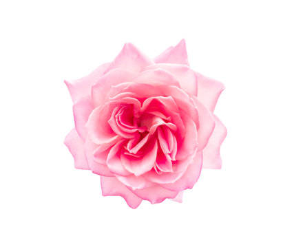 Moroccan Rose Fragrance Oil