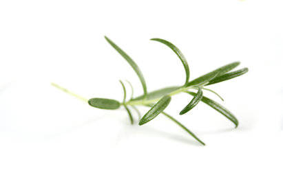 Rosemary Extract (ROE)